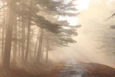Forest Road Morning Fog Poster by John Burk