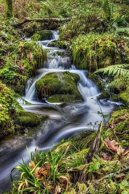 Forest Stream V2 Poster