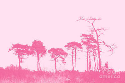 Forest Trees In Pink Poster by Natalie Kinnear