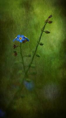 Forget Me Not Light Space Time Botanicals Art Exhibition 2014 Special Merit Award Poster by Simone Ochrym