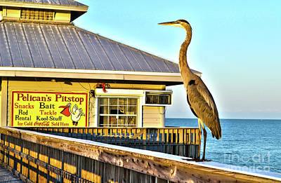 Fort Myers Beach Bird On Pier Poster