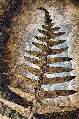 Fossilized Fern Poster by Carol Leigh
