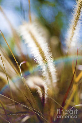 Fountain Grass Poster