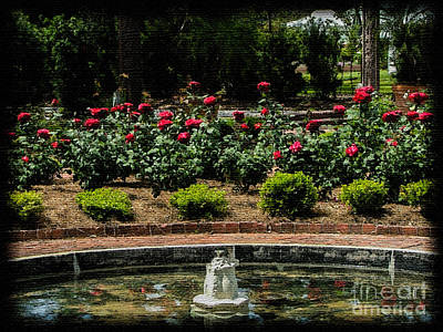 Fountain Of Roses Poster by Renee Barnes