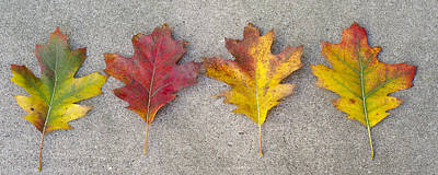 Four Autumn Leaves Poster
