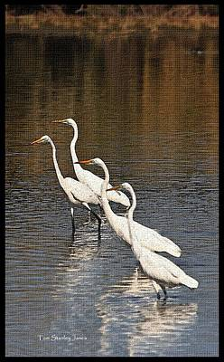Four Egrets Fishing Poster by Tom Janca