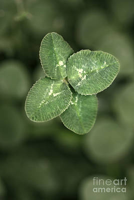 Four Leaf Clover Macro Poster by Brandon Alms