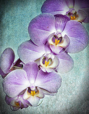 Four Little Orchids Poster