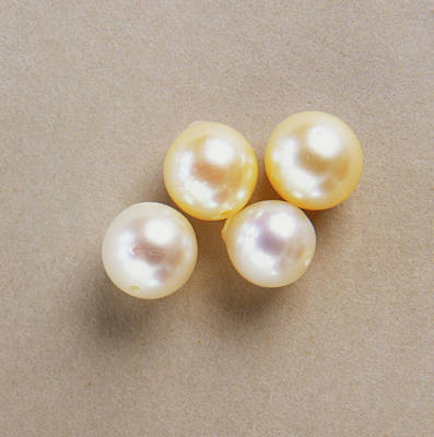 Four White Marine-cultured Pearls Poster