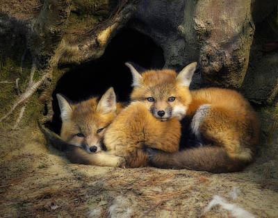Best Friends - Fox Kits At Rest Poster
