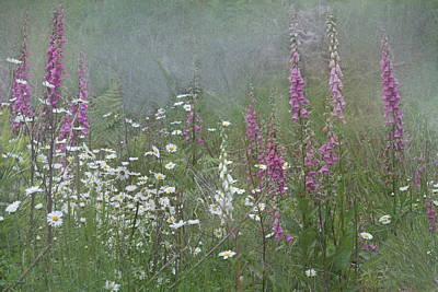 Foxgloves And Daisies Poster by Angie Vogel
