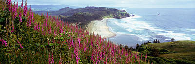 Foxgloves At Cascade Head, Tillamook Poster