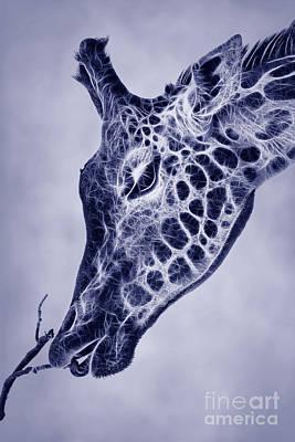 Fractal Giraffe Duotone Poster