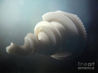Fractal Seashell  Poster