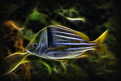 Fractalius-aquatic Fish 2 Poster by Jeff Swanson