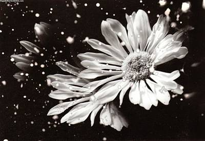 Fractured Daisy Poster
