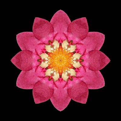Poster featuring the photograph Fragaria Flower Mandala by David J Bookbinder