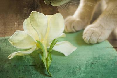 Fragrant Gardenia Poster