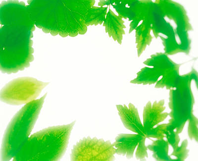Frame Of Fresh Green Leaves On Shiny Poster by Panoramic Images