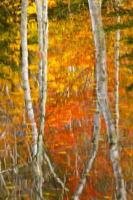 Framed Fire Birches And Foliage Reflection Poster by Jeff Sinon