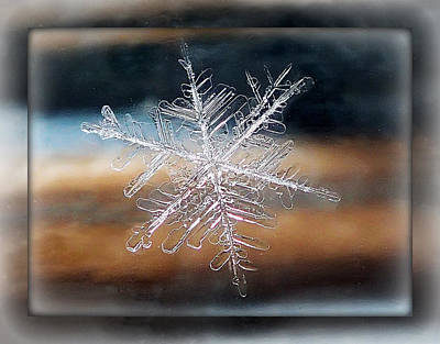 Poster featuring the photograph Framed Snowflake by Lorella  Schoales