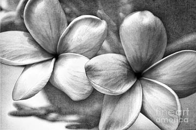Poster featuring the photograph Frangipani In Black And White by Peggy Hughes