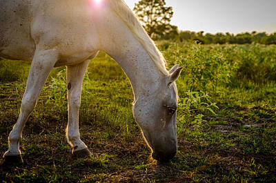 Freckles Pferd Poster by David Morefield