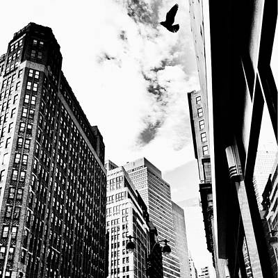 Freedom - Bird And Skyscrapers - New York City Poster by Vivienne Gucwa