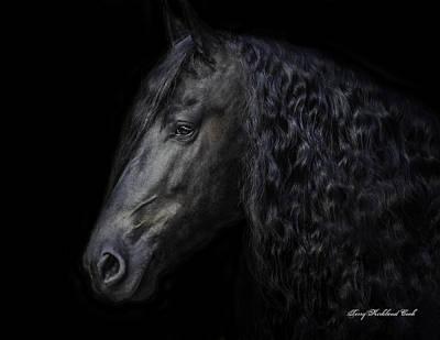 Friesian Stallion Poster by Terry Kirkland Cook