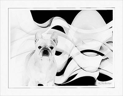 French Bulldog Poster by Barbara Chichester
