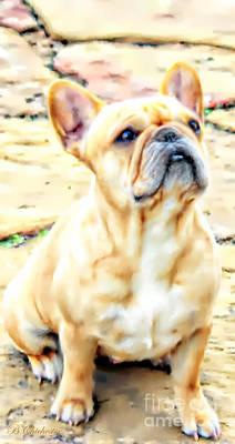 French Bulldog Portrait Poster by Barbara Chichester