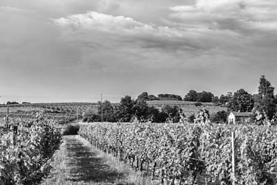 French Vineyard In Mono Poster