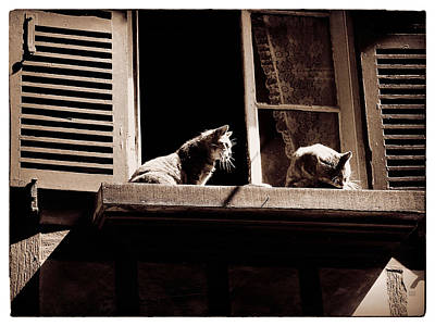 French Windowsill Cats In The Sun Poster