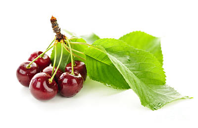 Fresh Cherries With Leaves Poster
