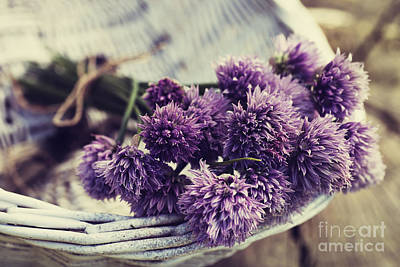 Fresh Chives Flower Poster by Mythja  Photography