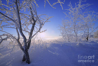 Fresh Cold Air Poster by Dan Jurak