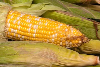 Fresh Corn At Farmers Market Poster