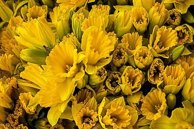 Fresh Daffodils  Poster by Garry Gay
