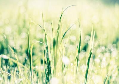 Fresh Green Grass In Bright Light Poster