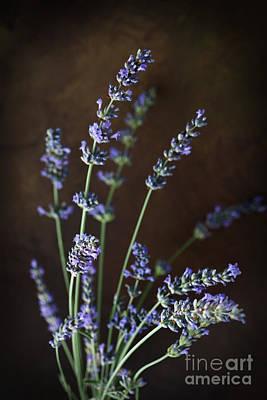 Fresh Lavender Poster by Mythja  Photography