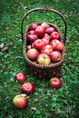 Fresh Picked Apples Poster by Edward Fielding