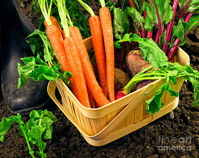 Fresh Picked Healthy Garden Vegetables Poster