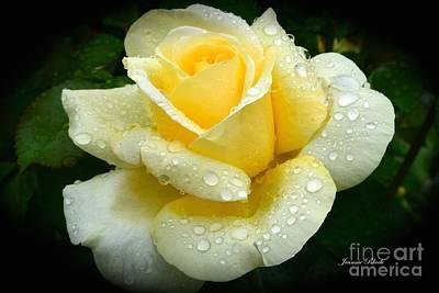 Fresh Sunshine Daydream Rose Poster