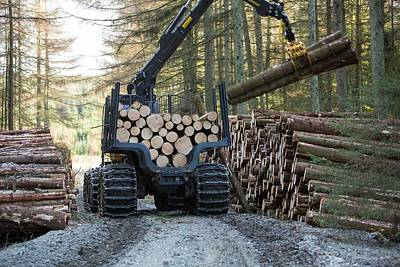 Freshly Cut Timber In Grizedale Forest Poster