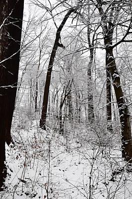 Freshly Fallen Snow Poster by Bill Cannon