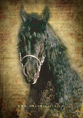 Friesian Diamond - A Portrait Poster