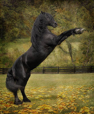 Friesian Stallion Tije  Poster by Fran J Scott
