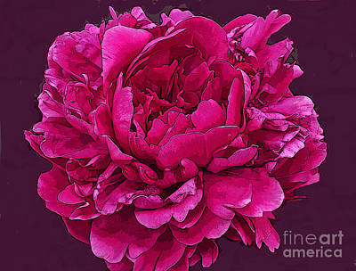 Frilly Lush Bright Pink Peony Poster by Maureen Tillman
