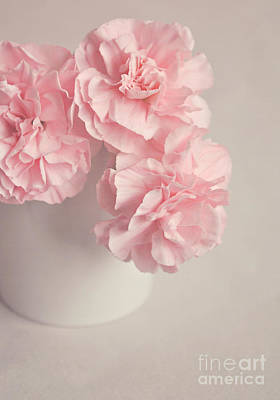 Frilly Pink Carnations Poster