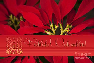 Froehliche Weihnachten - Poinsettia  - Euphorbia Pulcherrima Poster by Sharon Mau
